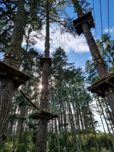 Adrenalin Forest treetops